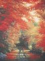 Candamar Desings Набор Осень в New England